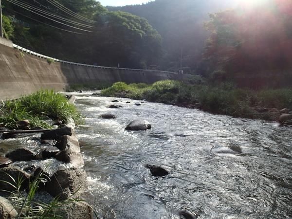 葛野川の下流域。いつもより水位が高いとの情報。濁りもやや入っていた