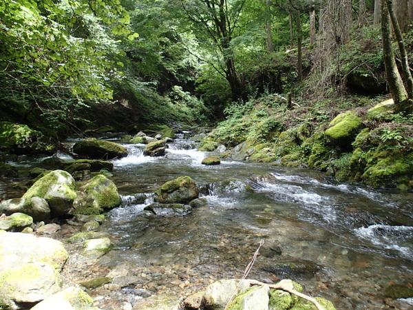 最も期待した日原川支流の川苔谷も静かに時が流れるだけ