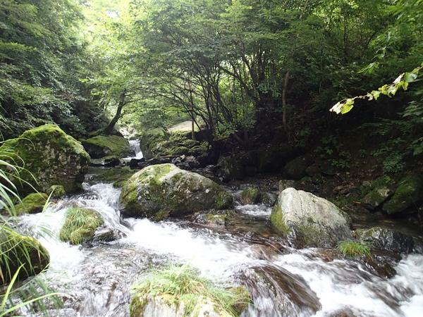 初めて訪れた大丹波川の上流部。行き当たりばったりだったので攻め場所を絞りきれず