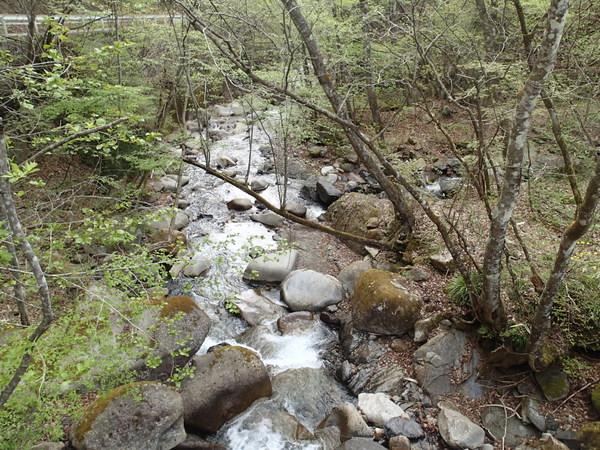 初めて訪れた奈良子川の上流部