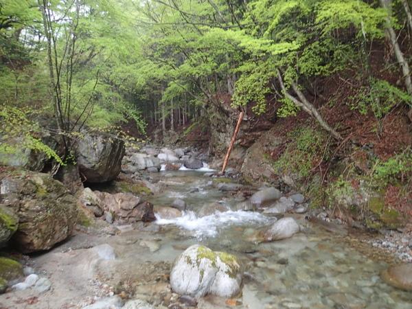真木川の中流域の様子。渓相はよいのだが当日の反応はさっぱり